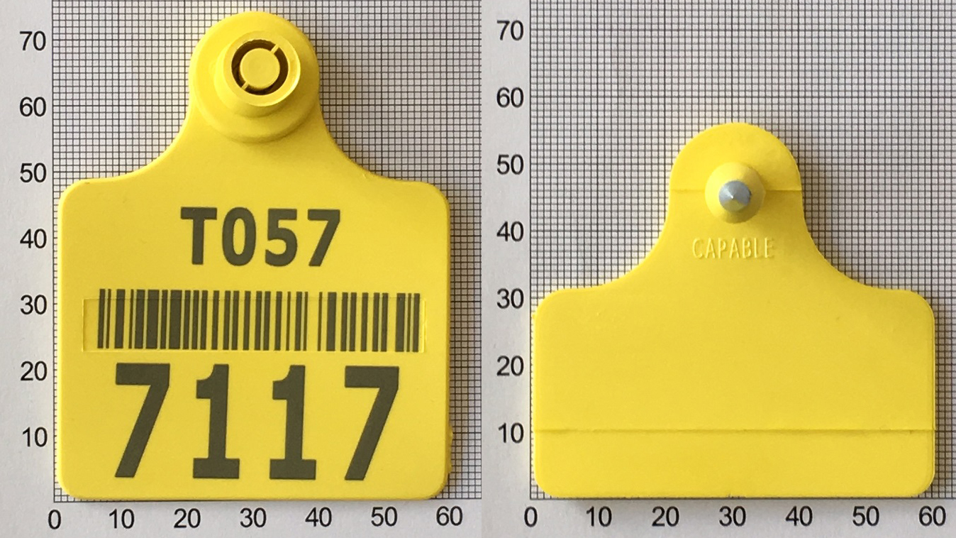 Conventional ear tags for bovine and ovine icar a051 xflitez Choice Image